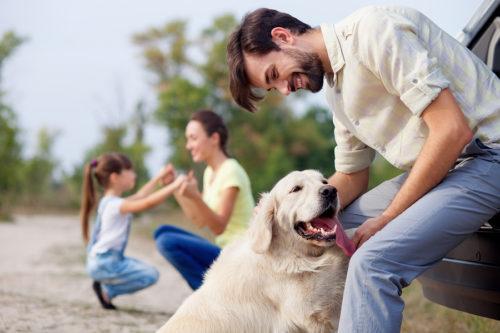 Hundeerziehungs-Halsband sinnvoll einsetzen