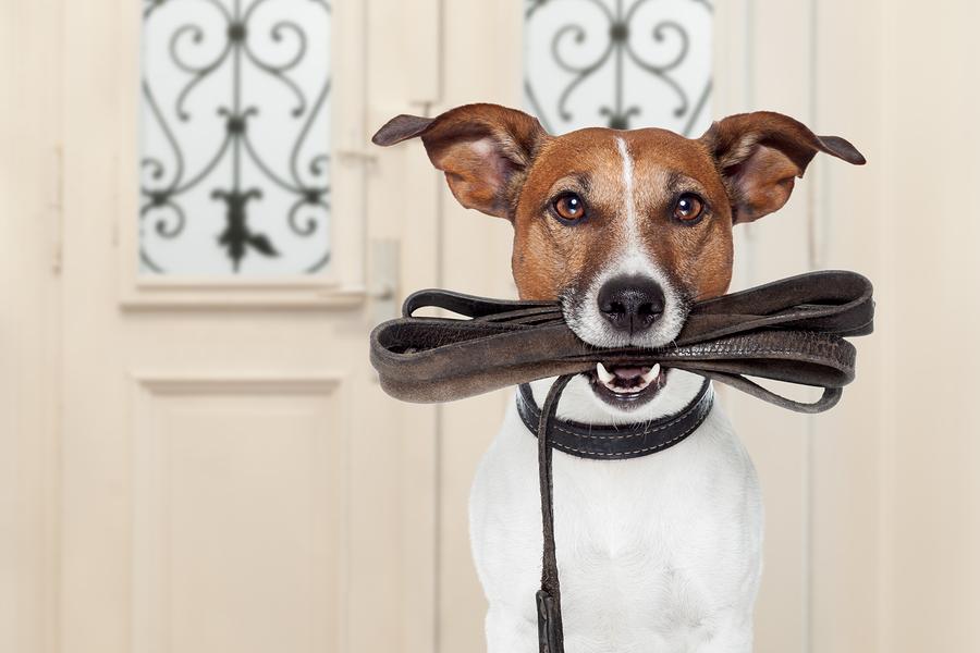 Erziehungshalsband Hund
